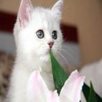 سهیلا بختیار Profile Picture