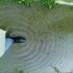 باران بهاری profile picture