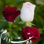 محمد هادی یگانه profile picture