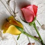 نازگل Profile Picture
