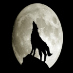 alone wolf profile picture
